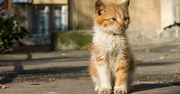 dirty-cat